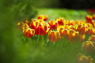 The smiles of spring