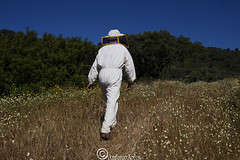Beekeeping. (AntonioArcos aka fotonstudio) Tags: abejas portugal nature ecology spain bees lifestyle andalucia trends campo agriculture sustainability beekeeping apicultura barrancos sierradearacenaypicosdearoche encinasola