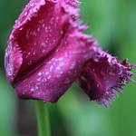 Parc Floral de Vincennes 20.05.2013 IMG_3663 thumbnail