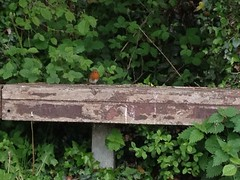 May 2013 (NelHowlin) Tags: robin