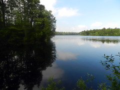 East Creek Pond (Christine_Ray) Tags: new pine forest state reserve national jersey pinelands barrens belleplain belleplaincapemayandparvin capemayandparvin