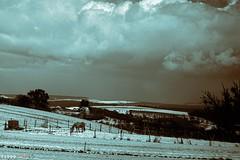 Horse in Snow (fs999) Tags: road blackandwhite bw detail clouds landscape paintshop blackwhite driving noiretblanc pentax strasse wolken nb route da paintshoppro 40 40mm xs luxembourg nuages paysage landschaft ontheroad luxemburg k5 topaz corel noirblanc aficionados pentaxist da40 artcafe ontheroadagain surlaroute fahrend lëtzebuerg blackwhitephotos 80iso topazlabs medingen pentaxian elitephotography ashotadayorso justpentax conduisant topqualityimage zinzins flickrlovers topqualityimageonly fs999 fschneider pentaxart pentaxk5 da40xs pentaxda40mmf28xs x5ultimate paintshopprox5ultimate bwfx2 bwfx21 detail31