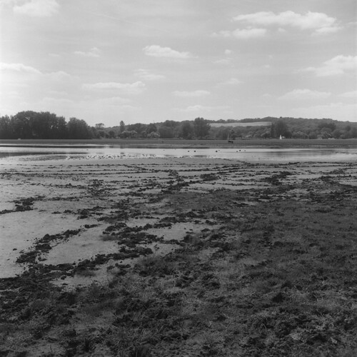 A walk through Port Meadow, Oxford