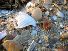 Shells at Dusk (Rachel.Chalkley) Tags: summer shells white detail macro cute beach nature colors closeup season photography spring amazing sand colorful pretty natural zoom gorgeous awesome seasonal shell stunning beaches grains