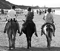 Three little friends (Wilamoyo) Tags: sea bw white black beach boys animals kids composition children fun seaside sand donkeys candid humour symmetry riding horseback riders saltburnbythesea