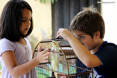 Snooping (tatiana barthem) Tags: friends boy pet amigos bird girl garden children kid garoto passarinho pássaro mg note garota curious crianças infância brincadeira maritaca observando gaiola