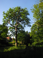 Coed Melyn Park (Dave Roberts3) Tags: park wood light green wales woodland landscape newport shade gwent natureselegantshots coedmelyn