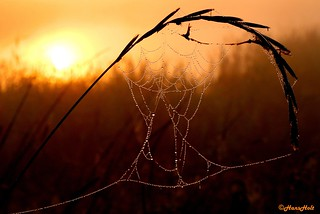 spiderweb with mist drops