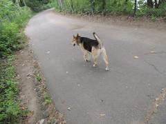 DSCN0133 (rlg) Tags: dog animal female mammal mutt august sally tuesday 13 0813 fpr 2013 nikonp510 201308 20130813 08132013