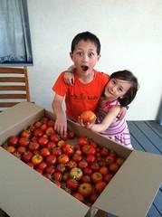 Pico & Daphne, Los Angeles, August 2013 (nils_gilman) Tags: box tomatoes august pico
