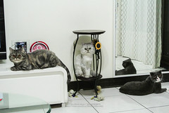 DSC_5072 (archiwu945) Tags: china cat kaohsiung   nikon1 nikon1v1
