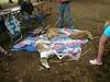 GreyhoundPlanetDay2008061