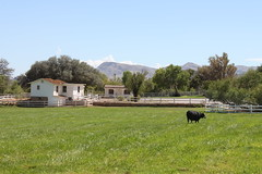 Lonely Cow (demeeschter) Tags: ranch park usa mountain heritage museum landscape spring day state nevada clear