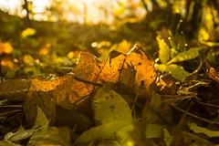 2013-10-31-Herbstfotos-20131031-081808-i082-p0001-SLT-A77V-50_mm-.jpg