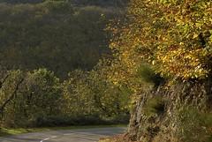 Automne en Haut-Languedoc (Michel Seguret Thanks for 10,4 M views !!!) Tags: autumn france fall nature automne season nikon herbst natur natura automn otoño d200 temporada saison stagione hautlanguedoc autonno michelseguret