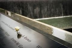 9/11 Memorial #8 (Dave Green Photo) Tags: leica nyc trip usa newyork colour film rose america memorial kodak 911 rangefinder scan september analogue portra m6 leicam6 portra400 2013 agphotographic