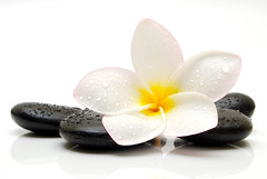 spa still life (espritlibrejouk13) Tags: massage health healthy wellness alternative wellbeing treatment spa therapy beauty dayspa fresh luxury white relaxing beautiful isolated natural flower stone relaxation hotstone black blossom bright yellow petal romance green petals frangipani tropical perfume plumeria exotic hawaiian bali tahiti tahitian hawaii tropics fragrant zen tonga pacific relax peace peaceful purity tranquility yoga south harmony meditation zenlike calmness pebble wet drop droplet water vision:outdoor=0971 vision:food=0511