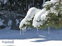 Smelt me (El Saskuas) Tags: mountain cold ice flickr nieve sierra burgos frio 2014 saskuas elsaskuas