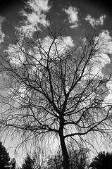 Ent-ramado 4 (juancarts) Tags: trees sky bw tree blancoynegro clouds contraluz arbol blackwhite nikon rboles branches silhouettes cielo nubes siluetas nube ramas d5100 nikond5100