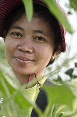 USAID's HARVEST program is helping farmers in Cambodia (US Mission to the United Nations Agencies in Rome) Tags: usaid cambodia rice farming agriculture development foodsecurity agriculturaldevelopment usaidcambodia usaidharvest