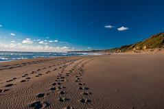 Caminant per platja Coln (faltimiras) Tags: ocean chile parque beach pacific playa national np region parc nacional rios pacifico platja oceano valdivia alerce ocea colun costanero