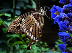 Give Your Kindle Wings (mynameistomo) Tags: flowers plants brown flower color nature leaves closeup forest butterfly garden parks insects blended funnythings finishedphotos vision:text=0501 vision:plant=0506 vision:dark=0516 vision:outdoor=0513 flowersfornet