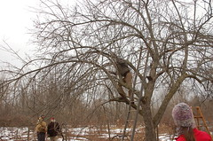 "Apple Pruning Party <a style=""margin-left:10px; font-size:0.8em;"" href=""http://www.flickr.com/photos/91915217@N00/13528318703/"" target=""_blank"">@flickr</a>"