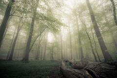 Fallen (derScheuch) Tags: light sky forest germany deutschland licht nebel sony himmel konica grn alpha wald 900 1735mm niedersachsen ammerland wildenloh