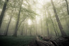 Fallen (derScheuch) Tags: light sky forest germany deutschland licht nebel sony himmel konica grün alpha wald 900 1735mm niedersachsen ammerland wildenloh