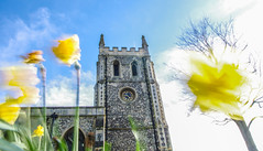 blurred daffodils Royston church (I was blind now I see!) Tags: daffodils church wind blow sky sun bend clock tower clouds yellow bricks medieval stone arches gargoyles shutters magnificent rays aura pressence moving splendour stalks royston hertfordshire tree
