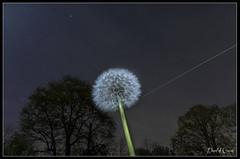 20170403_ISS et le Pissenlit (Clapiotte_Astro) Tags: night nuit astronomy astronomie canon700d tamron1750mm lune moon pissenlit fleur nightscape manfrotto iss international space station dandelion astrometrydotnet:id=nova2021038 astrometrydotnet:status=failed