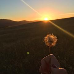 #wish #wishblower #makeawish #sunset #california (lilysmith7) Tags: wish wishblower makeawish sunset california