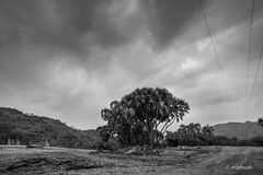 Black and White (mlahsah) Tags: bw blackandwhite blackwhite valley tree clouds nikon nikond750 ngc sabya jazan ksa sa السعودية صبيا وادي شجرة شجر سحب سحاب سماء أبيضأسود أبيضوأسود أحادي الجنوب