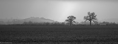 On our way to a lovely walk (Kernomore) Tags: landscape winter cloudy outdoor weather light countryside foggy country 1x2643facebook type event blackwhite k1 camera england afternoon pentax frame weekend field upton unitedkingdom gb