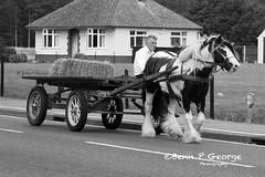 PONY-AND-TRAP-27-7-09-MILDENHALL-(BW) (Benn P George Photography) Tags: rafmildenhall 25709 bennpgeorgephotography c5a wrightpatterson 680219 c17a charleston 033124 c130e 633186 c130h niagara 891188 ec130j 968154 pony trap