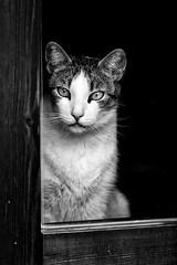 Mi gato Michin (carnuzo) Tags: leica m9