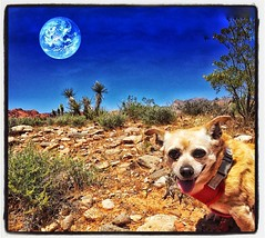 Happy Day Earthlings! (heiney) Tags: instagramapp square squareformat iphoneography uploaded:by=instagram lofi aliensky littledoglaughedstories