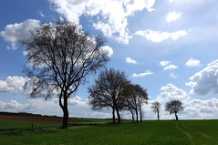 Landschap rond Schin op Geul/Landscape around Schin op Geul (truus1949) Tags: wandelen zuidlimburg schin op geul bomen landschap natuur wolken