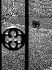 h-1719-2 (alessandromagagna1) Tags: toscana tuscany italy primeval photography