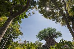 Tree of Life (krmrudolph) Tags: treeoflife tree animalkingdom disney disneyworld waltdisneyworld florida themepark