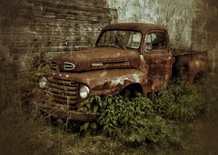 living in harmony... (BillsExplorations) Tags: truckthursday rust old ford fordtruck abandoned forgotten ruraldecay harmony htt abandonedillinois abandonedtruck vintage texture rural