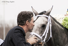 Showing the Love (Casey Laughter) Tags: racehorse turfway thoroughbred horse horseracing horses winner loser fun racing racetrack race track saddlecloth tack gate taa