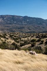 1703 White Tank and Mica Mountain from Point 4622 off the Bellota Trail (c.miles) Tags: arizonatrail bellotatrail coronadonationalforest micamountain point4622 rinconmountains santacatalinamountains whitetank