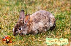 Happy Easter 🐇 (Simply Viola) Tags: lepre coniglio bunny buonapasqua happyeaster
