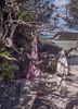 Gone swimming, Bermuda (jonathan charles photo) Tags: bermuda beach swim relax holiday longtail art photo jonathan charles topf25
