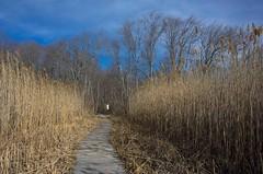 Morning in the Reserve (Bud in Wells, Maine) Tags: wellsreserveatlaudholm marsh rachelcarsonwildliferefuge wells maine reeds