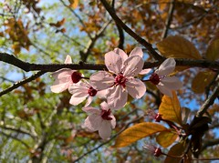 WP_20170325_08_58_58_Rich (vale 83) Tags: blossom microsoft lumia 550 macrodreams friends coloursplosion colourartaward flickrcolour wpphoto wearejuxt beautifulexpression