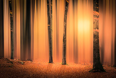 DREAM (andreassofus) Tags: art fineart fineartphotography nature landscape trees woods forest dream fairy fairyland dreamworld abstract autumn fall light colorful