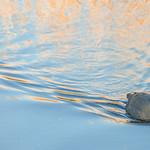 reflets dorés thumbnail