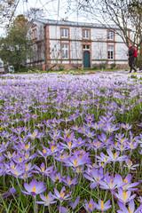 IMG_89 (schaffnerjoggl) Tags: frühling blüten bunt farben hermannshof schausichtungsgarten weinheim deutschland krokus